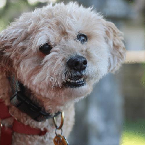 Erin Albright's dog Jack Albright